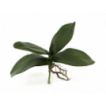 Folhagem Orquidea Pequena